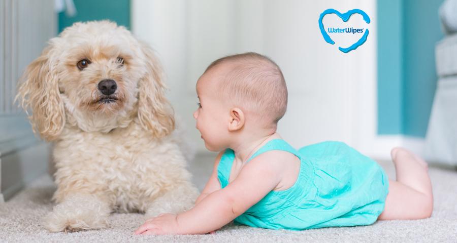 Kisbaba és háziállat egy családban